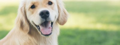 pet health insurance in Temperance STATE | Barron Insurance